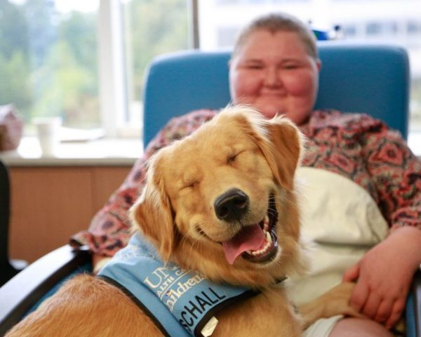 SCHALL, the rehabilitative facility dog at the N.C. Cancer Hospital's pediatric hematology oncology clinic, with a patient.