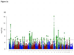 """This """"Manhattan plot"""" shows the locations of the 44 major depression loci on the human genome. The vertical axis shows statistical significance. The higher the more significant. Everything shown above the red horizontal line is statistically significant."""