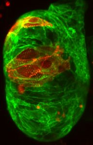 An image from the Liu Lab